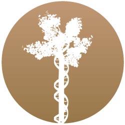 Bioetica News Torino – mensile n. 3 novembre 2012