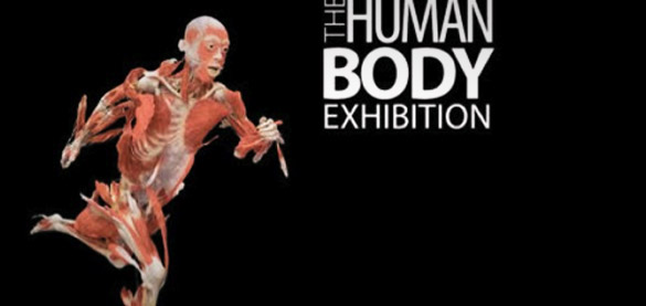"""Il culto dei morti?  """"Corpi umani"""" in mostra al Palaolimpico"""