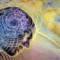 Convegno al Santo Volto: Psicosomatica e Bioetica clinica