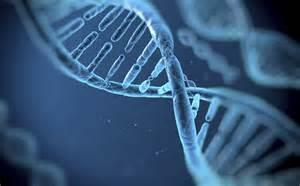 «Gene editing: ascoltare tutti, con cautela»