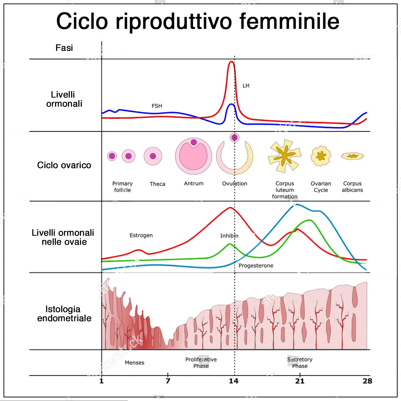 schema-ciclo-riproduttivo-femminile